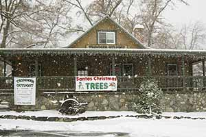Silver-tip fir trees, Ponderosa pine and other locally grown evergreen trees are available every year just after Thanksgiving.