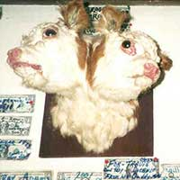 2-headed calf in the bar at Jiggs Nevada