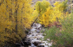 Lamoille Canyon in Fall