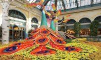 Las Vegas Correspondence - November 2017