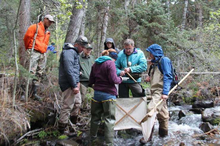 BioBlitz volunteers collecting insects from a creek in Great Basin Park