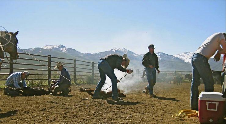 Branding calves at the Wright Ranch, Tuscarora, Nevada.