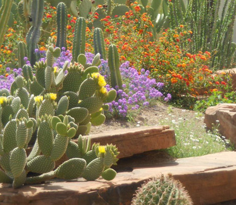 A small part of the Cactus Garden at Ethel M's Chocolate Factory
