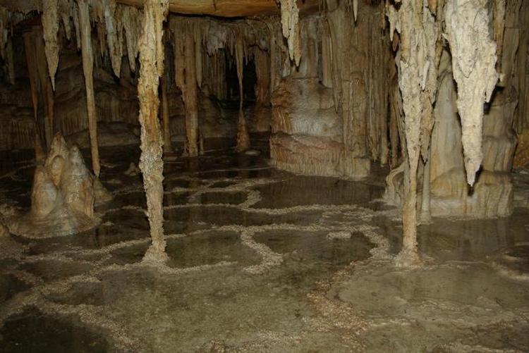 The 'Cypress Swamp' in Lehman Caves