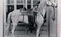 Gold medal saddle on a papier-mache horse