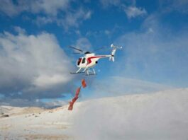 Helicopter delivering Bighorn sheep to Pyramid Lake Reservation