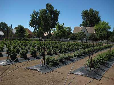 Jacobs Family Berry Farm, Gardnerville Nevada