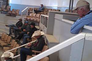 buyers at auction, Fallon Nevada