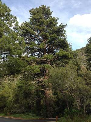 Upper Lehman Ceek Campground, Great Basin National Park Nevada