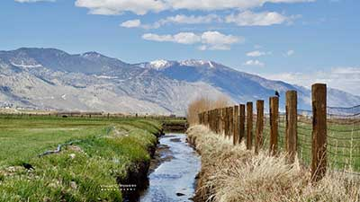 Carson Valley Springtime