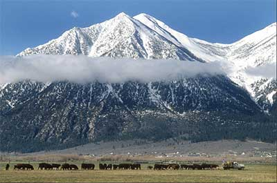 Carson Valley, at the foot of the Sierra Nevada