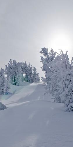 Deep Powder 2017 in the Tahoe Basin