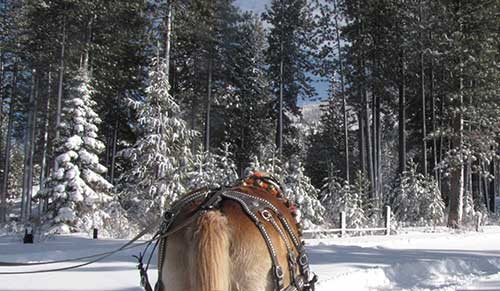 Duke in the Woods, Borges Sleigh Rides, Lake Tahoe