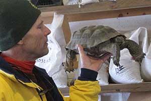 Ed Kleiner and his hibernating desert tortoise
