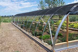 Hoop House Comstock Seeds, Gardnerville Nevada