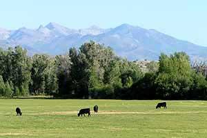 Ruby Mountains enroute Jiggs Nevada