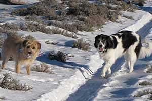 Shorety and Harley in Diamond Valley