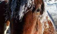 Horse Pogonip