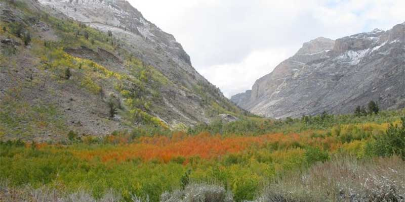 Fall colors in Lamoile Canyon