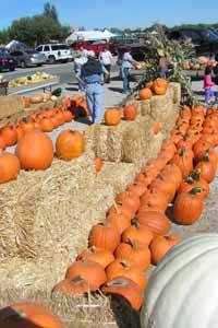 Fall Festival, Lattin Farms Fallon Nevada