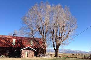 Stodieck Farm, Carson Valley Nevada