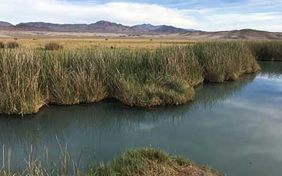 Tecopa hot spring