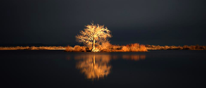 The Tree at Lake Lahontan